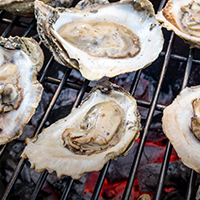 Discover South Carolina Oysters